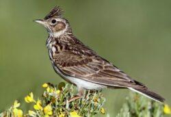 Pasari din 32 de specii comune isi reduc efectivele