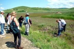 De ce au disparut pelicanii din Delta Transilvaniei