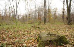 Dezastru ecologic. La Saliste, judetul Cluj, padurea-i jefuita ca in vestul salbatic