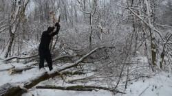 In atentia autoritatilor! Defrisari ilegale in zona Vladeni-Borsa