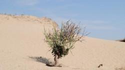 Un desert a aparut intr-o tara din Europa. Pustiul se afla foarte aproape de Republica Moldova