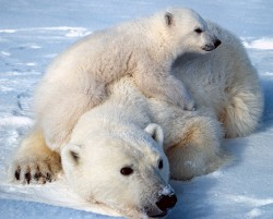 Noi specii de animale protejate