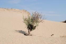 Unde este singurul desert din Romania?