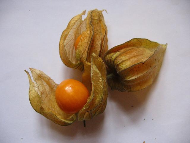 Cătina incașă, fructul care previne şi tratează LEUCEMIA, HEPATITA şi REUMATISMUL