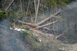 La Marisel, apocalipsa dupa… taietorii de lemne