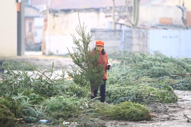 Mii de brazi au rămas abandonați în piețele timișorene în ziua Crăciunului