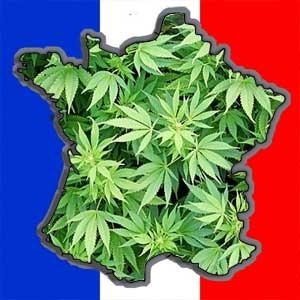 Trebuie oare depenalizat sau chiar legalizat consumul de cannabis? Intrebarea a fost pusă de editorialistul influentului ziar de seară Le Monde. In ediţia sa de sâmbătă, semnatarul articolului se pronunţă clar pentru legalizarea cannabisului. Motivele acestei luări de poziţie se explică prin faptul că Le Monde a avut acces la un studiu pe această temă realizat de unul dintre cele mai influente think tankuri din Franţa, Terra Nova. Ce spun specialiştii ? Terra Nova este un think tank, un « laborator de ideei », foarte cunoscut pentru poziţiile sale liberale pe teme de societate. Le Monde a avut acces zilele trecute în exclusivitate la concluziile unui studiu realizat de Terra Nova pe tema sensibilă a consumului de cannabis. Verdictul este fără drept de apel : « politica de represiune din Franţa este un eşec ». CIfrele atestă acest lucru : în ciuda unui arsenal represiv dintre cele mai dure din lume – în Franţa consumul de marijuana este un delict pasibil cu un an închisoare şi 3750 de euros amendă – francezii, alături de danezi, sunt cei mai mari consumatori ai acestui drog din Europa. Aproape 9 la sută din populaţia între 15 şi 64 de ani a consumat cel puţin o dată în ultimul an cannabis. Peste o jumătate de milion de francezi fumează zilnic cel puţin un joint. Represiunea nu foloseşte deci la nimic şi în plus costă enorm : 570 de milioane de euro sunt consacrate anual cannabisului. Numai interpelările costă 300 de milioane. La acestea se adaugă costul social indirect : cartiere întregi sunt destabilizate de trafic şi apar pe piaţă produse contrafăcute şi mai periculoase. Cum obiectivele sistemului nu au fost atinse, Terra Nova studiază trei alternative pentru a obţine rezultate mai bune. Scenariul numărul 1 : legalizarea consumului. Sancţiunile sunt deci suprimate în caz de detenţie de marijuana pentru uz personal, aşa cum se face déjà în Spania şi Portugalia. Peste jumătate din costuri ar fi astfel reduse, cu alte cuvinte o economie de 310 milioane de euro pe an. 