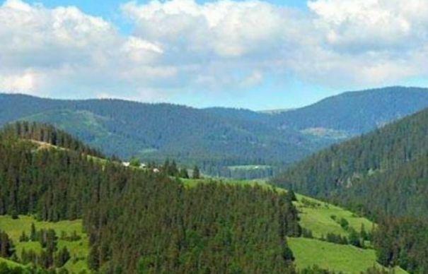 Curtea de Conturi a Romaniei confirma jaful din padurile Argesului