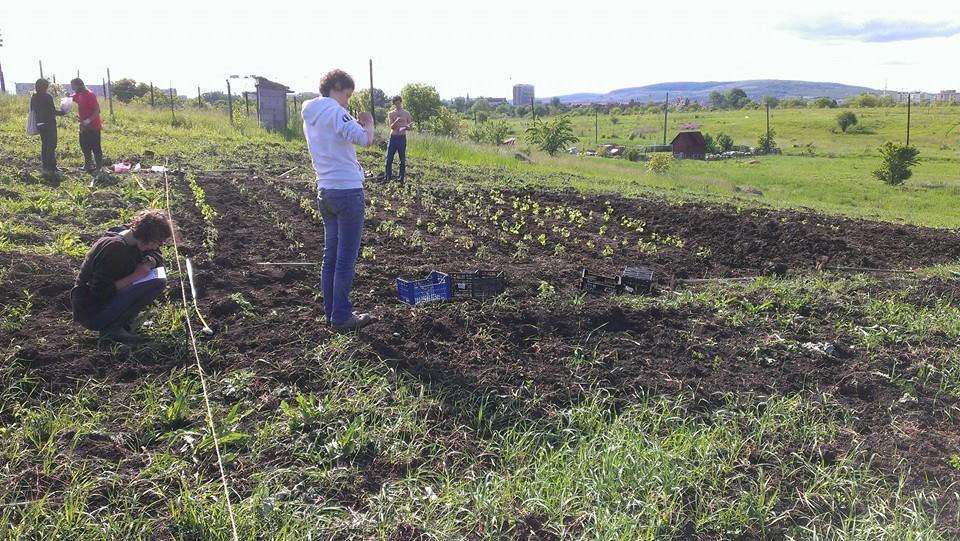 Gradina Comunitara pe strada Soporului. Eco Ruralis va invita sa va cultivati legumele si sa salvati semintele traditionale