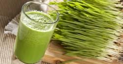 """""""Sangele verde"""", elixirul din iarba de grau care iti reface sanatatea"""