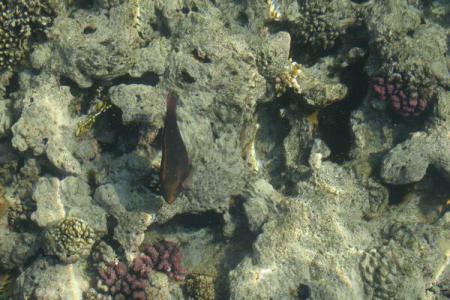 Încălzirea climei: Grav episod de albire a coralilor în Pacificul de Nord