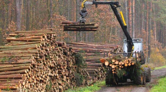Apelul Federaţiei Proprietarilor de Păduri şi Păşuni din România Nostra Silva: opriţi până pe 18.12.2014 proiectul lui Buican