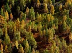 Anchetele privind retrocedarile iau amploare. ANRP cere verificari pentru 2.700 ha de padure restituite mostenitorilor Cantacuzino