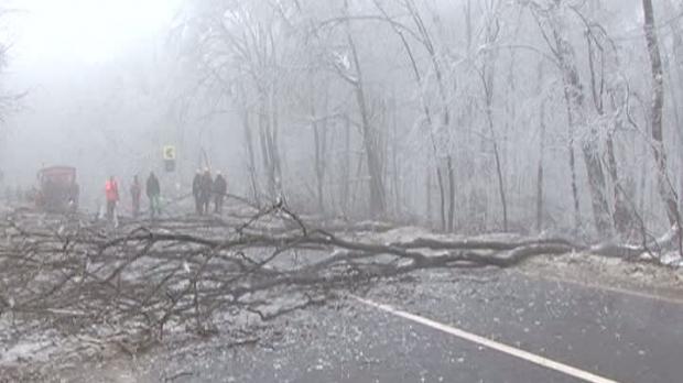 O pădure a fost distrusă de ploaia îngheţată