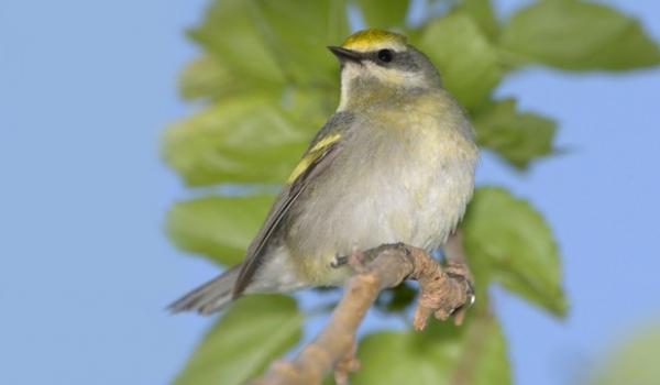 Păsările au un simţ special: ce pot presimţi aceste vieţuitoare şi cum reacţionează?