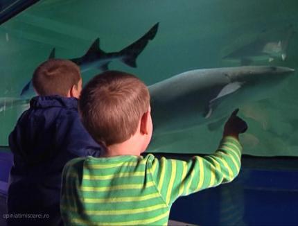 Oradea: Expoziţie de rechini vii într-un acvariu mobil la Lotus Center