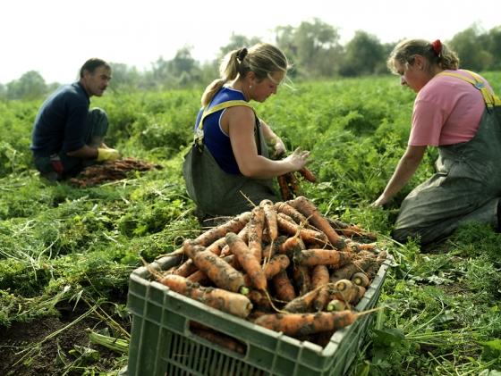 Recomandări privind achiziţia produselor ecologice