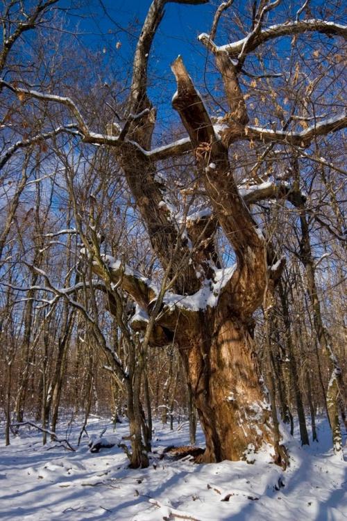 Unde este cea mai bătrână pădure din România?