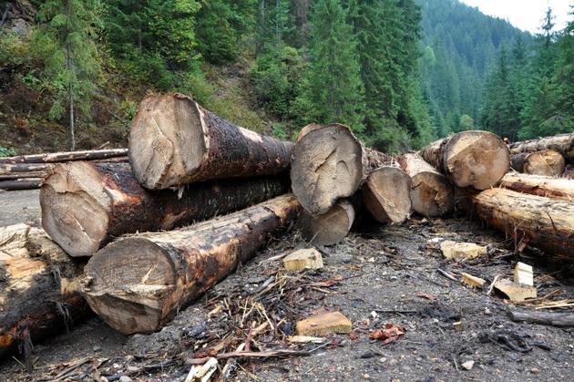 """Se înfiinţează """"SMURD-ul pădurii"""". O reacţie urgentă la paguba pe care au făcut-o anul trecut """"hoţii ca-n codru"""""""