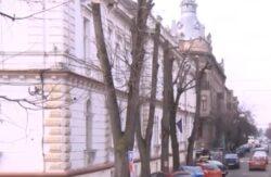 Cetatenii si peisagistii aradeni contesta modul in care sunt toaletati copacii din Arad