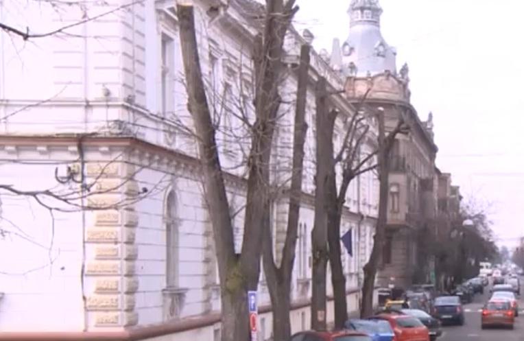 Cetăţenii şi peisagiştii arădeni contestă modul în care sunt toaletaţi copacii din Arad