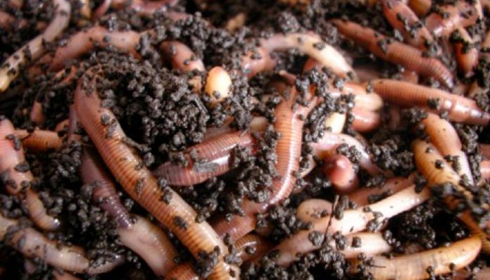 Fermele de râme în agricultura bio