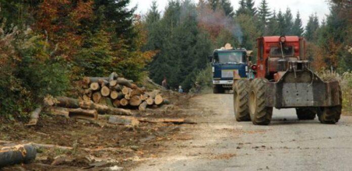 Garda de Mediu încă aplică sancţiuni pentru exploatarea forestieră