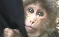 Imaginile care au impresionat milioane de oameni: cum reactioneaza un animal eliberat din captivitate