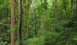 Ministerul Mediului si-a propus sa impadureasca peste 7.000 de hectare in acest an
