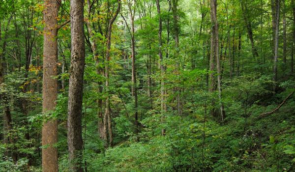 Ministerul Mediului și Consiliul Concurenței își dau mâna ca pădurile să fie vândute cât mai ieftin în continuare
