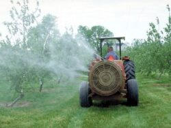 Pesticidele cresc riscul de afectiune cardiovasculara