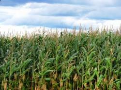 Profitul Monsanto a scazut cu 34% la trei luni