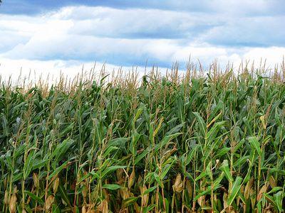 Profitul Monsanto a scăzut cu 34% la trei luni