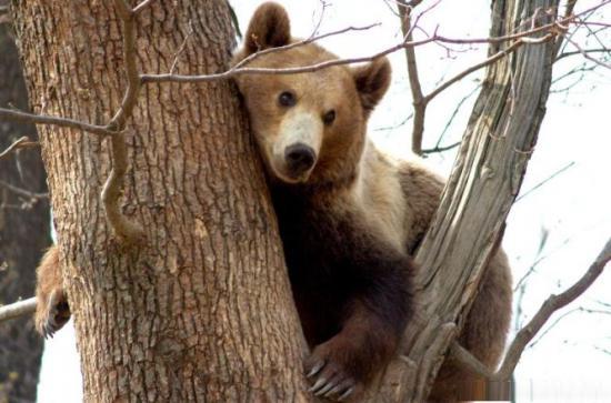 Urşii şi lupii din România, atracţia turiştilor germani