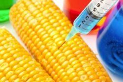 USDA: americanii au testat in Romania peste 50 de tipuri de plante modificate genetic