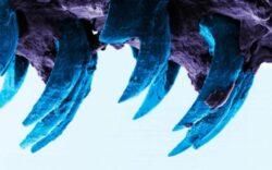 Oamenii de stiinta au descoperit cel mai rezistent material din natura