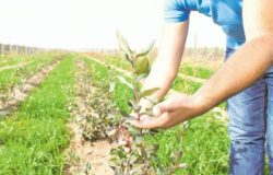 Agricultura ecologica prinde radacini si la noi