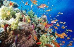 """Marea Bariera de Corali risca sa ajunga o """"groapa de gunoi""""!"""
