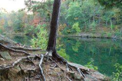 Jumatate din speciile de arbori din lume sunt amenintate de disparitie