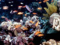 Coralii din Marea Bariera, modificati genetic pentru a putea supravietui schimbarilor climatice