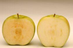 Americanii vor cultiva primele mere modificate genetic