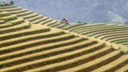 "Agricultura mondiala a ajuns la momentul ""peak food""?"