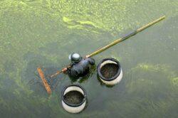 SUA: Amenda record de 5 miliarde de dolari pentru poluare