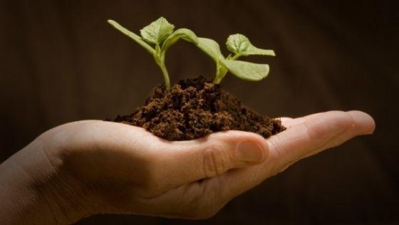 Fermierii ieseni primesc subventiile pentru culturile ecologice