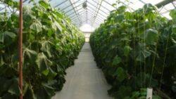 Noi subventii pentru culturile ecologice din Iasi
