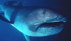 Un rechin dintr-o specie rara a fost aruncat de valuri pe o plaja