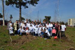 Tinerii liberali din mangalia au plantat copaci