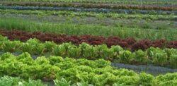 Aproape 15.000 de hectare de teren din Suceava, lucrate în sistem ecologic
