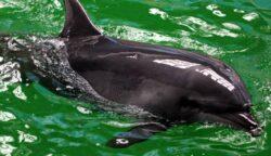 Apel pentru salvarea delfinilor din Marea Neagra