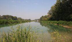 Specii rare protejate, de flora si fauna, pot fi vazute la 20 de kilometri de Bucuresti